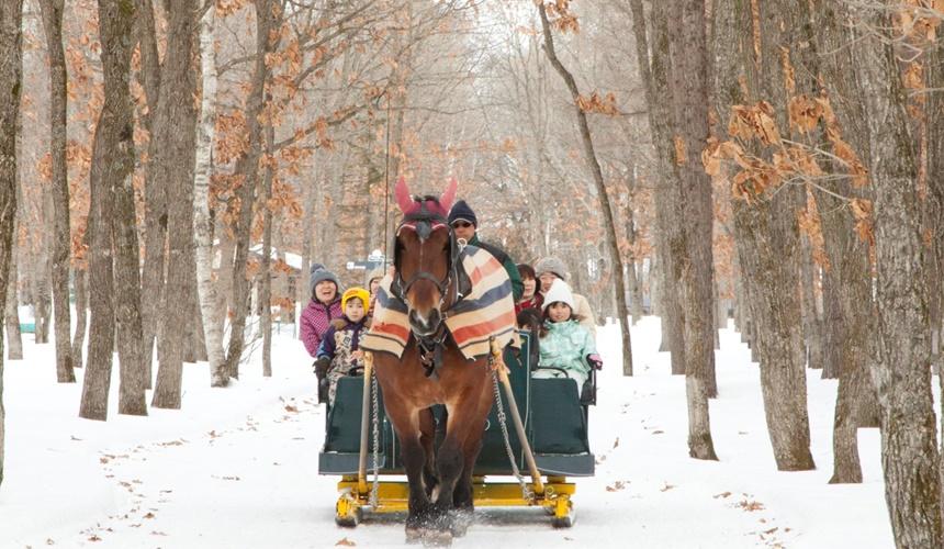 北國優駿公園可享受雪地裡乘馬體驗