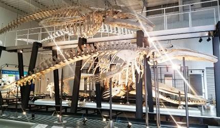 北海道足寄動物化石博物館