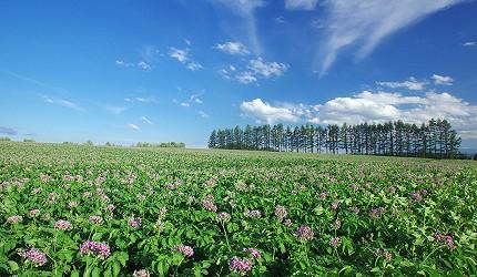 北海道十勝風景