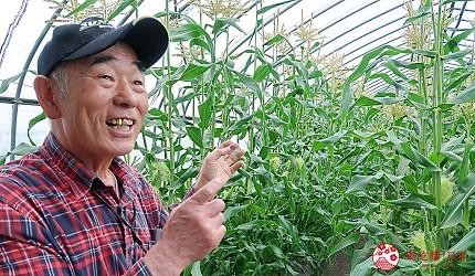 北海道賞花推薦惠庭摘玉米體驗
