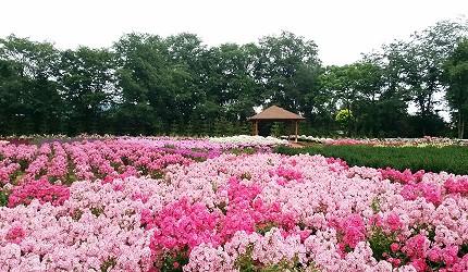 十勝 Nuppuku Garden