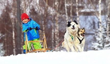 北海道最大四季度假勝地「留壽都度假區」冬季狗拉雪橇