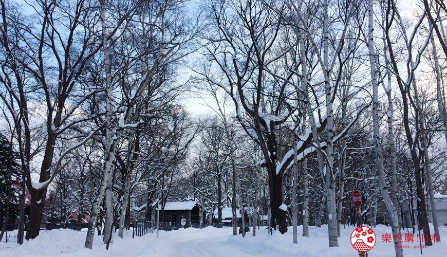 札幌自由行冬天必去景點「北海道大學」校園照片