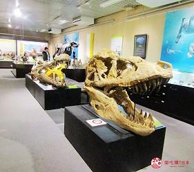 札幌自由行冬天必去景点「北海道大学」综合博物馆的恐龙化石