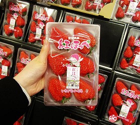 北海道札幌最大規模商場「AEON MALL 札幌發寒店」販售的草莓