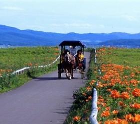 北海道道东「北见市」人气景点WAKKA 原生花园