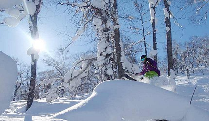 搭乘北海道 Resort Liner 前往新雪谷滑雪场