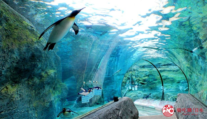 北海道旭川景點推薦旭川動物園的海洋隧道