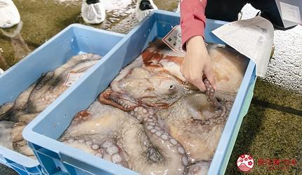 北海道道东四天三夜推荐行程的「罗臼渔市」