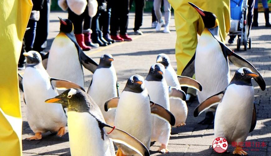 北海道亲子游推荐城堡式登别尼克斯海洋公园内城堡内尼克斯广场上超萌企鹅游行