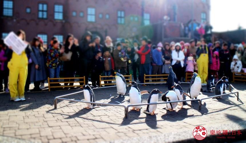 北海道親子遊推薦城堡式登別尼克斯海洋公園內城堡外超萌企鵝親身配合企鵝的生態與小知識