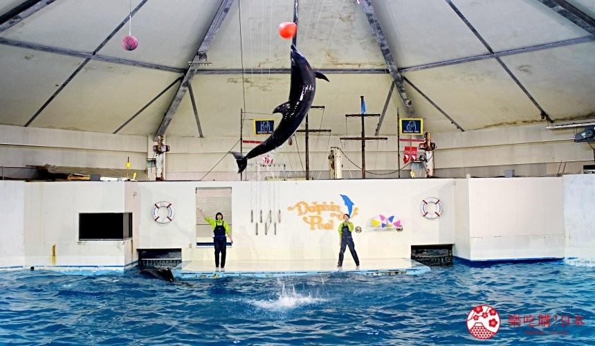 北海道親子遊推薦城堡式登別尼克斯海洋公園內城堡內海豚秀表演場地的海豚秀中海豚從水中躍起