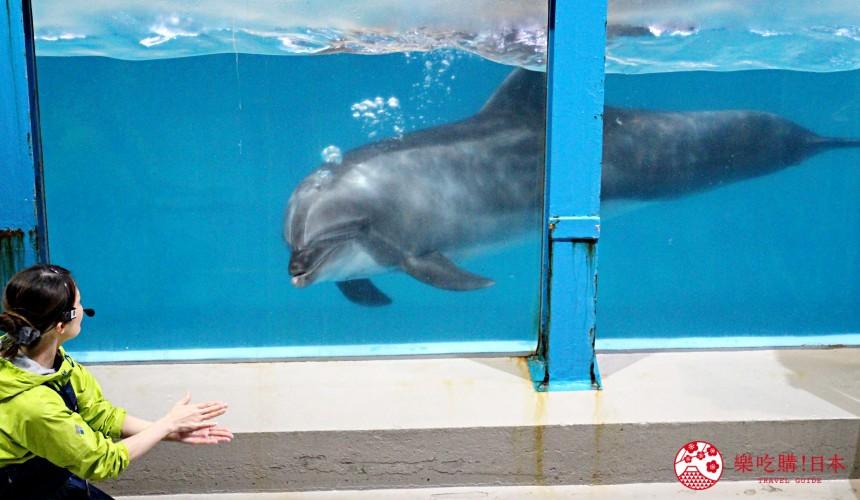 北海道親子遊推薦城堡式登別尼克斯海洋公園內城堡內海豚秀表演場地的海豚秀中海豚跟池外工作人員互動