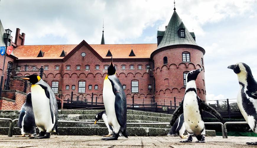 北海道亲子游推荐城堡式登别尼克斯海洋公园内超可爱企鹅游行