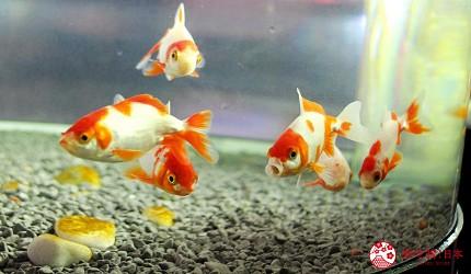 北海道亲子游推荐城堡式登别尼克斯海洋公园内城堡内金鱼万华镜远镜的金鱼