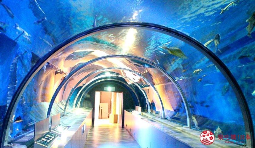 北海道亲子游推荐城堡式登别尼克斯海洋公园内城堡内超浪漫的海洋隧道
