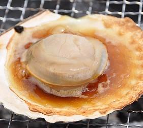 日本北海道最北端的地區稚内市宗谷的地方限定極品超鮮甜帆立貝