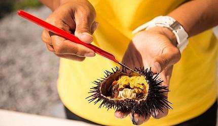 日本北海道最北端的地区稚内市宗谷的利尻岛神居海岸公园传统古法手捕的海胆切开可见海胆肥美
