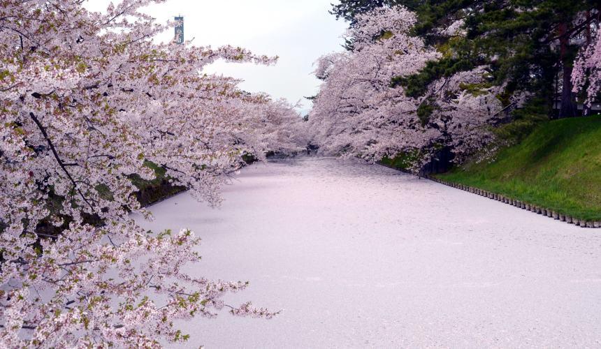北海道函馆青森弘前行程推荐推介滑雪温泉雪樱点灯日本北国风情体验青森弘前公园的花筏