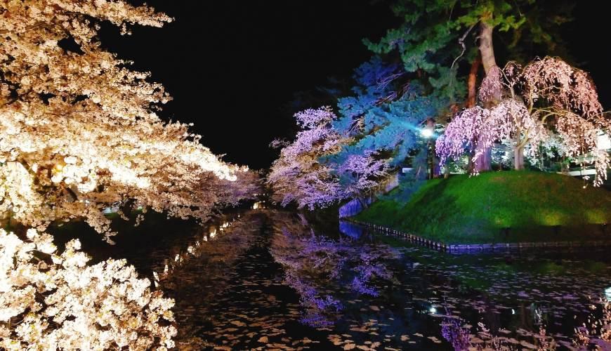 北海道函馆青森弘前行程推荐推介滑雪温泉雪樱点灯日本北国风情体验弘前公园内粉色地毯般的樱花筏