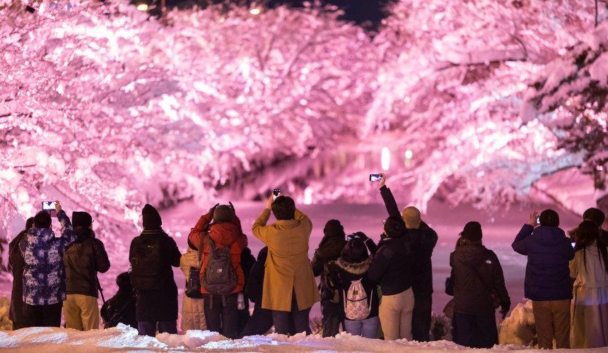 北海道函馆青森弘前行程推荐推介滑雪温泉雪樱点灯日本北国风情体验弘前公园内弘前城雪樱点红灯