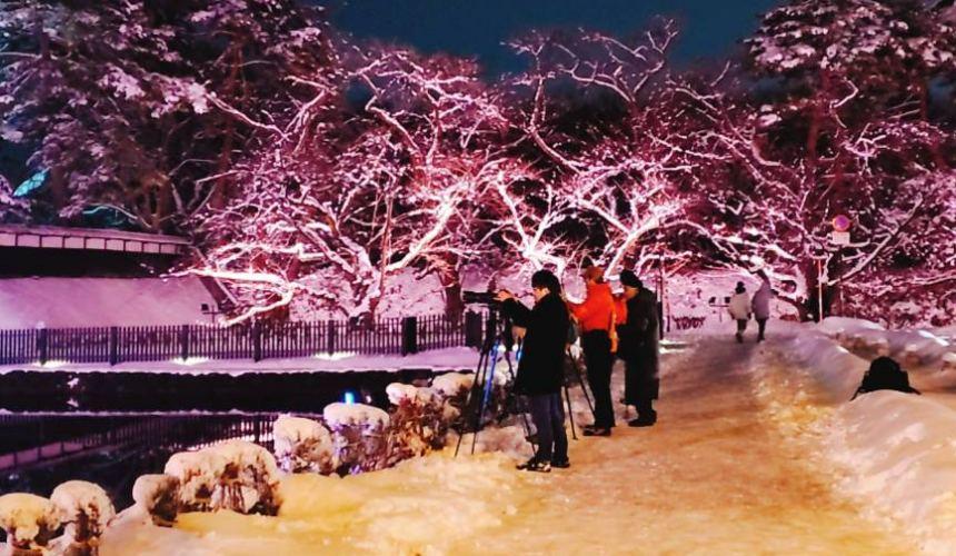北海道函馆青森弘前行程推荐推介滑雪温泉雪樱点灯日本北国风情体验弘前公园内弘前城雪樱点彩灯
