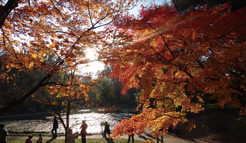北海道札幌自由行红叶银杏前缐下雪天气北海道大学景点推荐